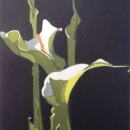 Arum Lilies I
