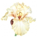 The Golden Flower Blooms