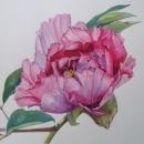 Peony Rose Nicola Lynch Morrin