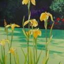 Garden Irises 11