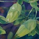 Passiflora II '10