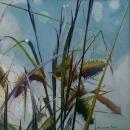 Pond-reeds
