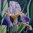 The-iris-1