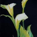 3 Arum Lilies