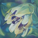 Passionflower 1