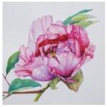 Peony Rose etching2